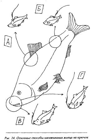 рыбалка насаживание на живца на крючок