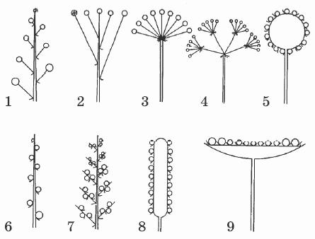 Лист, его строение Разнообразие листьев | Биология