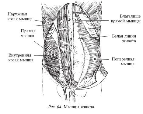 rastyagivayutsya-mishtsi-vlagalisha