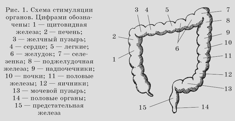 малахов геннадий петрович очищение организма