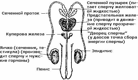 molodnyak-russkoe