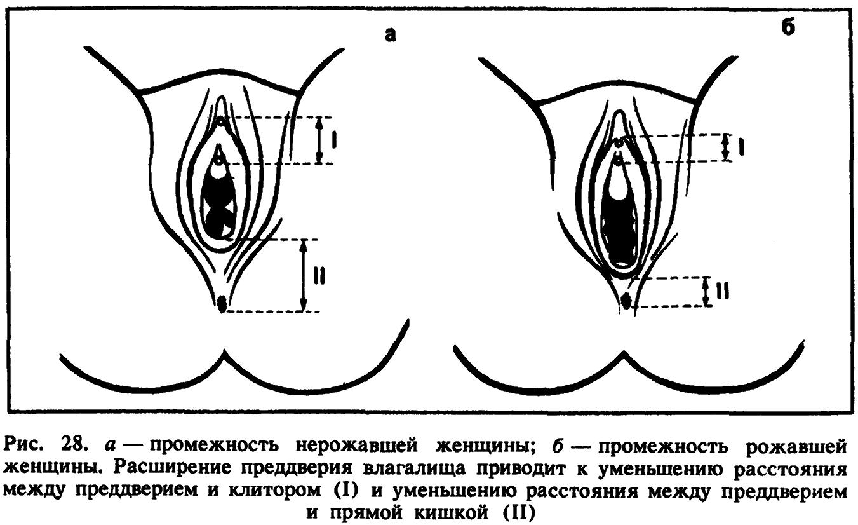 Самое эффективное мастурбация клитора 24 фотография
